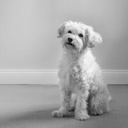 Porträtfoto von Mario, Bürohund D&CO